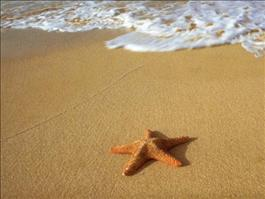 inspiration starfish